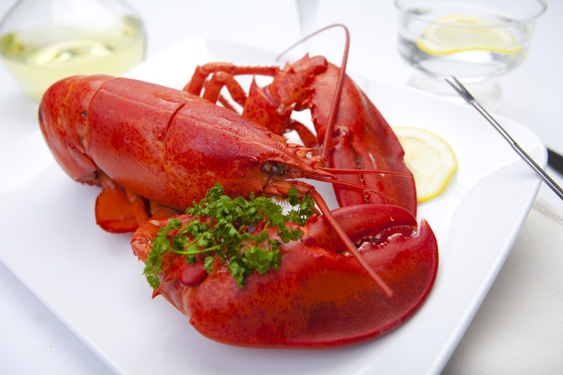 Cooked Atlantic Lobster