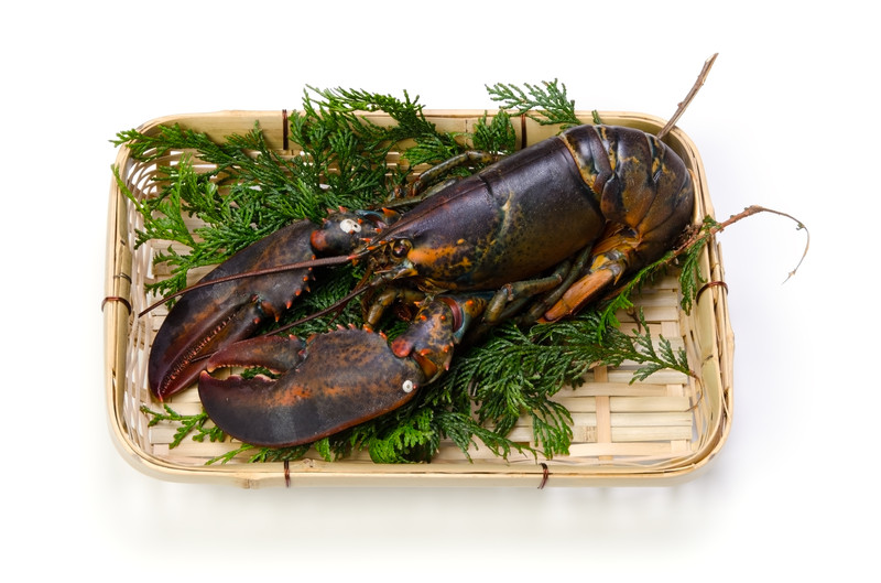 Raw Atlantic Lobster